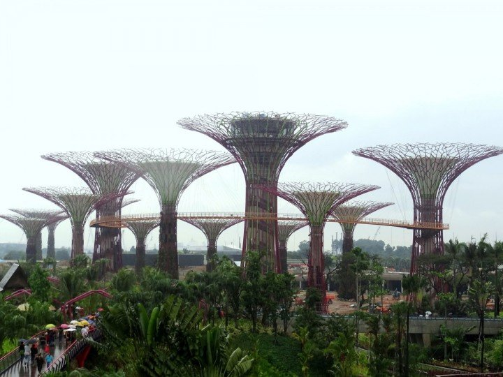 some-of-these-super-trees-contain-photovoltaic-cells-which-bring-in-solar-energy-so-the-trees-can-light-up-at-night