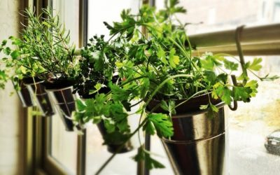 How to grow fresh spices in your home