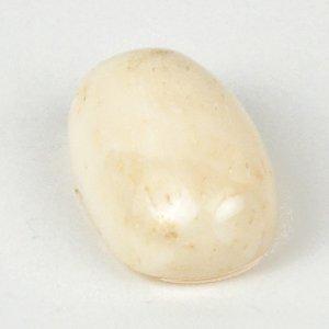 бял корал