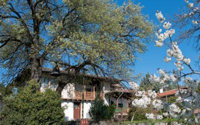 Bright memories of Gorna Oryahovitsa