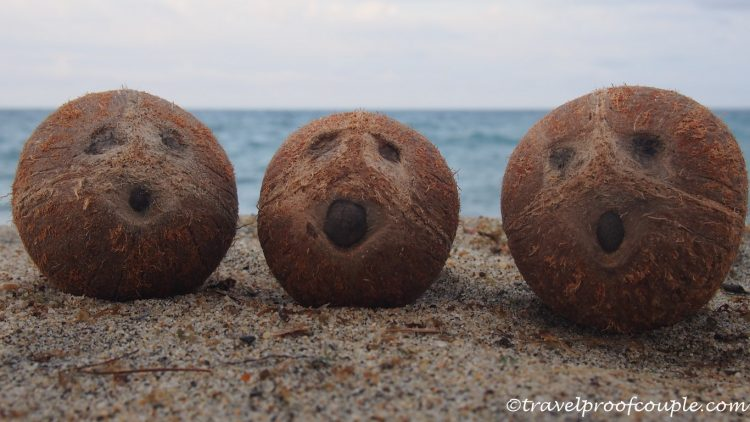 With Anton and Flame around the world: Caribbean-coconut dreams come true!