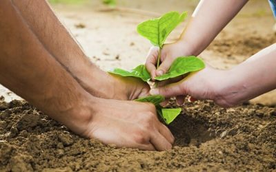 Over 20 000 trees will be planted by the children of Bulgaria - spring 2017