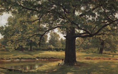 Quercus robur, I'm pleased