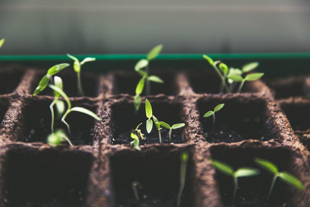 Растенията са сложни организми, които имат богат на усещания живот