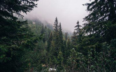 Искрено и лично за околната среда в България