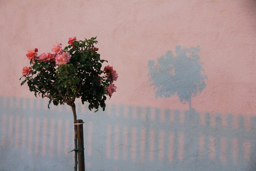 Австрийска поезия: Ингеборг Бахман