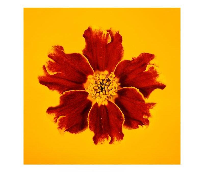 """Медитация върху обект чрез фотография и композиция – 9-ти януари, галерия """"Дебют"""""""