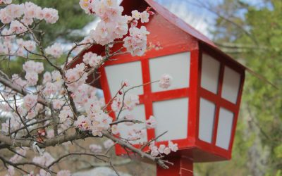 The most beautiful parks in Japan