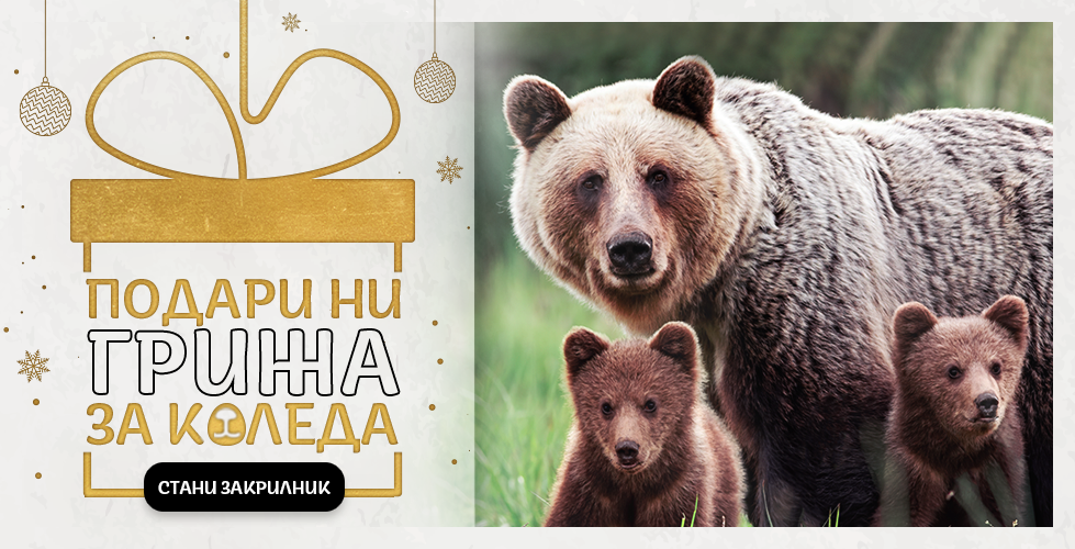 WWF launches a campaign to protect bears in Bulgaria