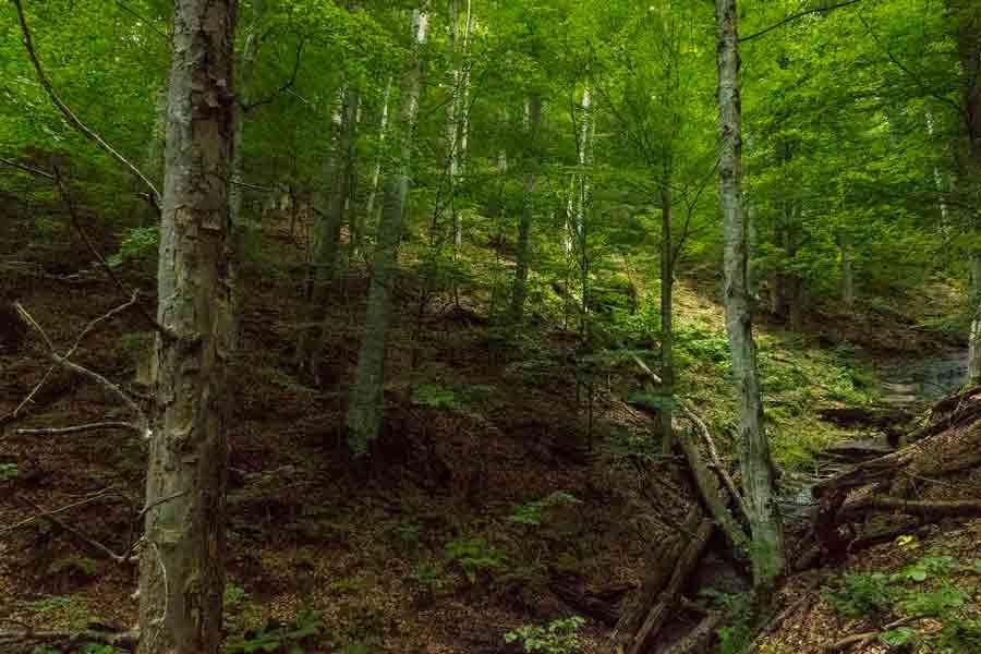 Часът на Земята чества Международния ден на гората