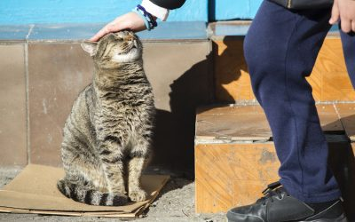 An initiative of the Four Paws Foundation and the Sofia Municipality to count stray cats in Sofia has been launched