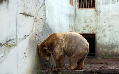 """""""Зов за зоопарковете"""" – кампания на организацията за защита на животните """"Четири лапи"""""""